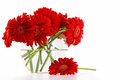 Red gerber daisies in vase glass Royalty Free Stock Photography