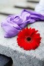 Květina a purpurová šátek