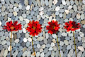 Red gerbera flowers, zen stones Royalty Free Stock Photo