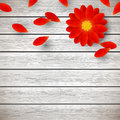 Red gerbera on wood