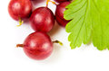 Red gooseberry on a white background Royalty Free Stock Images