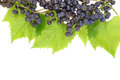 Red grape with leaves Royalty Free Stock Image