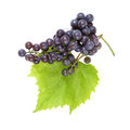 Red grape with leaves Stock Photo