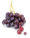 Red grape on white Stock Image