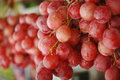 Red grapes a bunch of Royalty Free Stock Photo