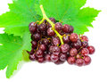Red grapes with fresh leaves. Stock Photos