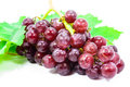 Red grapes with fresh leaves. Royalty Free Stock Image