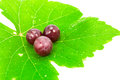 Red grapes with fresh leaves. Royalty Free Stock Images