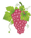 Red Grapes, illustration Stock Photography