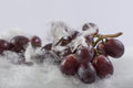 Red grapes in snow white background fresh hand made idea from cotton wool Stock Photos