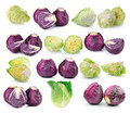 Red and green cabbage isolated on white background Royalty Free Stock Photo
