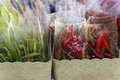 Red and green chilli in plastic bag on vegetable shop , market, Royalty Free Stock Photo