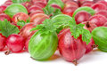 Red and green gooseberries with leaves isolated on white background Royalty Free Stock Photo