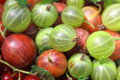 Red and green gooseberry closeup background macro photo close up Royalty Free Stock Photo