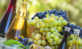 Red and green grapes with wine Stock Photos