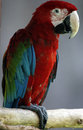 Red and green macaw bird in zoo Stock Image