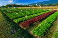 Red and green vegetable garden Royalty Free Stock Photography