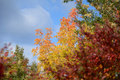 Red green and yellow leafs on trees with blue sky clouds fall autumn Royalty Free Stock Images