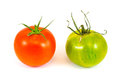 Red and green zebra tomatoes two one one isolated on a white background Stock Photos