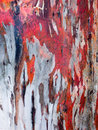 Red Gum Bark Background Stock Photo