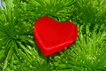 Red heart on the green foliage Royalty Free Stock Image