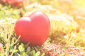 Red Heart on Green spike flower tree for love and Valentine`s Day Royalty Free Stock Photo