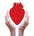 Red heart in hand a human Stock Photo