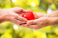 Red heart in human hands on green background Stock Photography