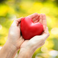 Red heart in human hands on green leaves background Stock Photos