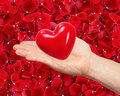 Red heart in man hand on beautiful red rose petals Royalty Free Stock Photo