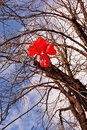 Red heart shaped balloons hanging on tree branch without leaves bright blue sky background Royalty Free Stock Photo