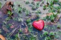 Red heart in water puddle on marshy grass moss love valentine s day romantic symbol of Royalty Free Stock Images