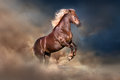 Red horse rearing up Royalty Free Stock Photo