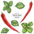 Red Hot Chili and Basil Royalty Free Stock Photo