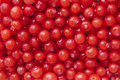 Red huckleberries macro closeup of pile of fresh ripe juicy Royalty Free Stock Images