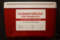 Red ice chest with label stating Human Organ for Transplant Royalty Free Stock Photo
