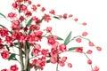 Red Japanese Flowering Cherry