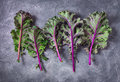 Red kale leaves on gray Royalty Free Stock Photo