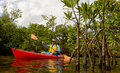 Red kayak and man in a through the mangroves in a tropical destination Royalty Free Stock Photography