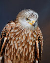 Red kite Royalty Free Stock Image
