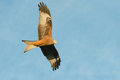 Red kite flying against a blue sky Royalty Free Stock Photography