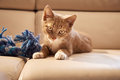 Red kitten on couch portrait of sitting next to blue toy and looking into the camera Royalty Free Stock Photos