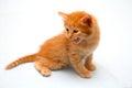 red kitten harm growls