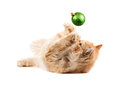 Red kitten lying on his back flips a new year s green ball isolated Stock Photography