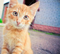 A red kitten sitting on a stone. Stock Images