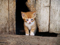 Red kitten small sitting next to a wooden plank Stock Images