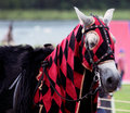 Red knight s horse the of old on back jousting in full armour Stock Photography