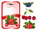 Red label with berries. Vector. Royalty Free Stock Images