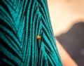 Red Ladybug On A Shirt