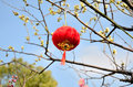 Red lantern with blue sky Stock Image